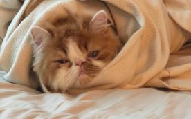 Benefits of having cat as a pet